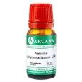 ARCANA® Aesculus Hippocastanum LM VI