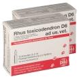 Rhus toxicodendron D6 ad us. vet.