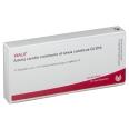 WALA® Arteria carotis communis et sinus caroticus Gl D 10