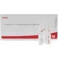 WALA® Arteria cerebri media Gl D 15