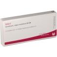 WALA® Cerebrum regio motorica Gl D 8