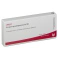 WALA® Corpora quadrigemina Gl D 8