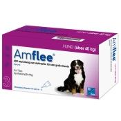 Amflee® 402 mg Lösung zum Auftropfen für Hunde