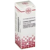 DHU Caladium seguinum D3 Dilution