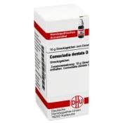 DHU Comocladia dentata D12 Globuli