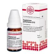 DHU Eupatorium perfoliatum D12 Globuli