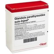 Glandula parathyreoidea suis-Injeel® Ampullen