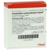 Gnaphalium polycephalum-Injeel® Ampullen