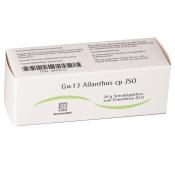 Gw13 Ailanthus cp JSO Globuli