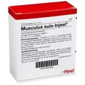 Musculus suis-Injeel® Ampullen