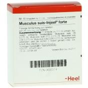 Musculus suis-Injeel® forte Ampullen
