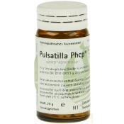 Pulsatilla Phcp®