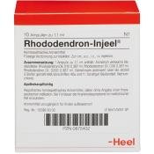 Rhododendron-Injeel® Ampullen
