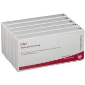 WALA® BETULA/ARNICA Comp. Amp.