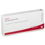 WALA® Nervus facialis Gl D 8
