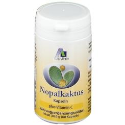 Avitale Nopal-Kaktus
