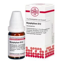 DHU Bryophyllum D12 Globuli