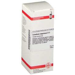 DHU Caladium seguinum D2 Dilution