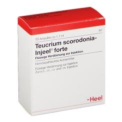 Teucrium Scorodonia-Injeel® forte Ampullen