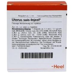Uterus suis-Injeel® Ampullen
