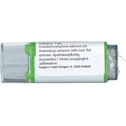 Viburnum C12
