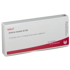 WALA® Arteria renalis Gl D 6