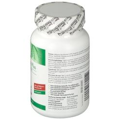 ZeinPharma® Wild-Yams Plus 500 mg