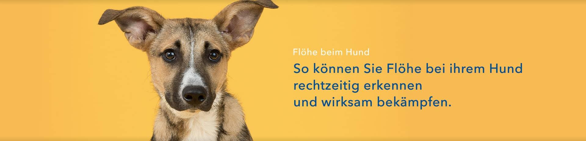 Flöhe beim Hund - Ratgeber - shop-apotheke.com