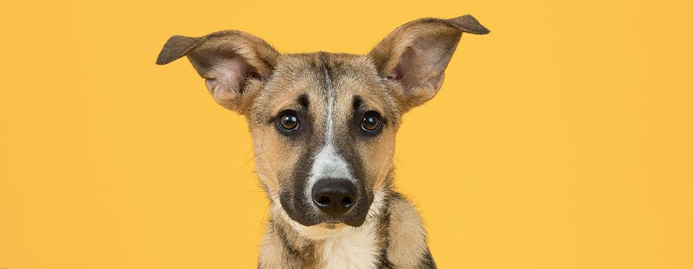 Flöhe Beim Hund Wirksam Bekämpfen Shop Apothekecom