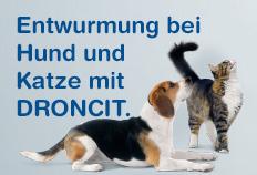 Entwurmung bei Hund & Katze - Droncit®