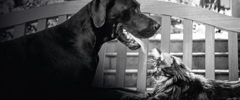 FRONTLINE® gegen Zecken und Flöhe bei Hunden & Katzen