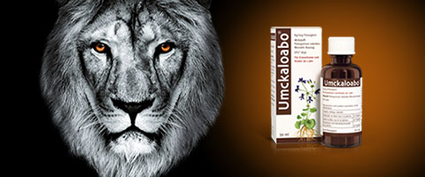Umckaloabo® - wirksam bei akuter Bronchitis