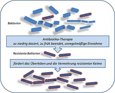 antibiotiktherapie