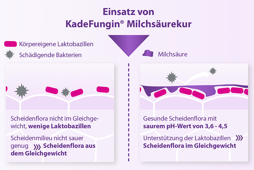 KADEFUNGIN® MILCHSÄUREKUR Produkte - shop-apotheke.com