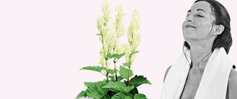 femiLoges® – Mit der einzigartigen Kraft der Sibirischen Rhabarberwurzel